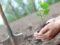 Смоленская область присоединится к всероссийской акции «Сад памяти – сад жизни»